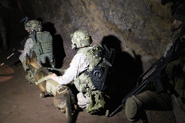 Los perros adiestrados realizan una eficaz labor